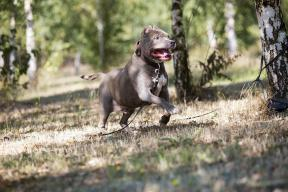 Rufus 10